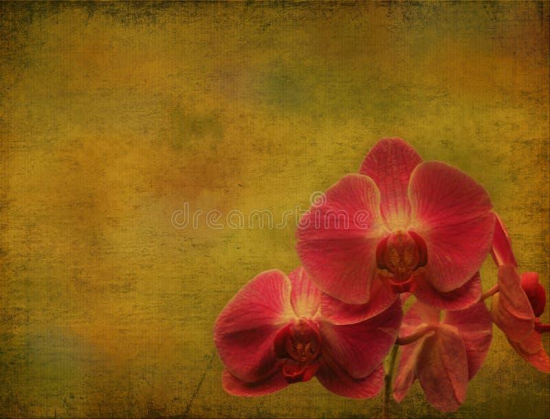 Orquídea de la vendimia stock de ilustración
