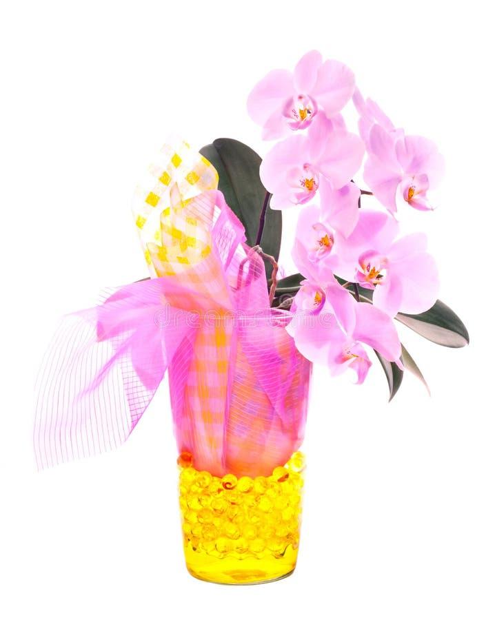Orquídea de Phalenopsis fotografía de archivo libre de regalías