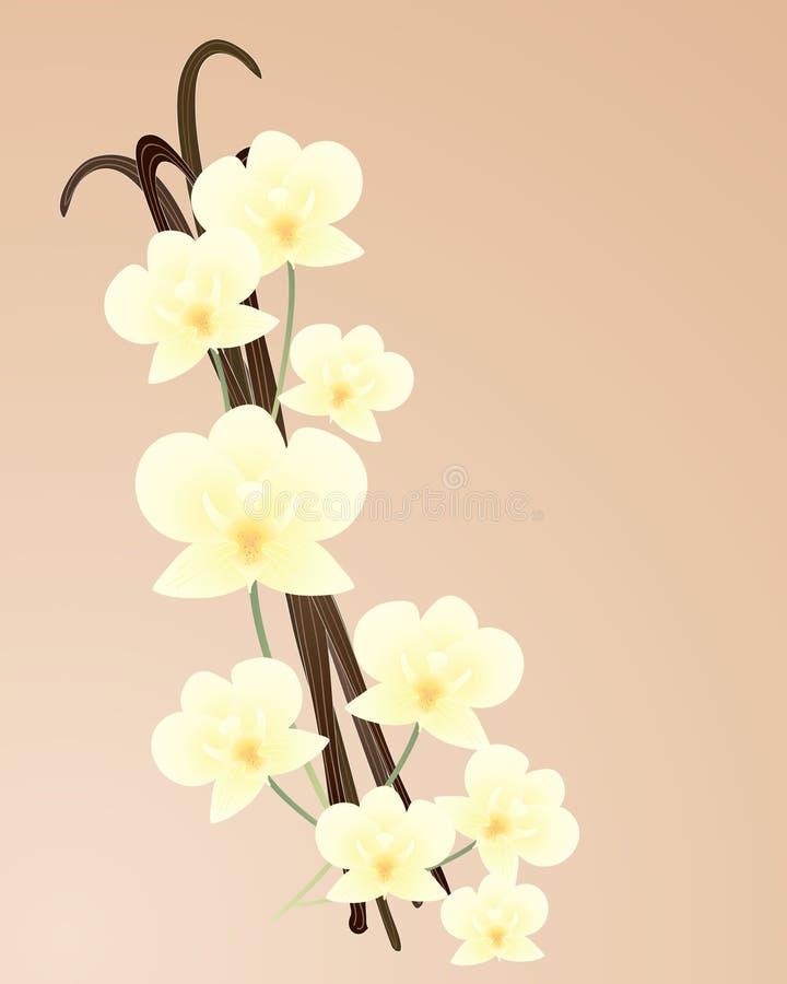 Orquídea de vainilla stock de ilustración