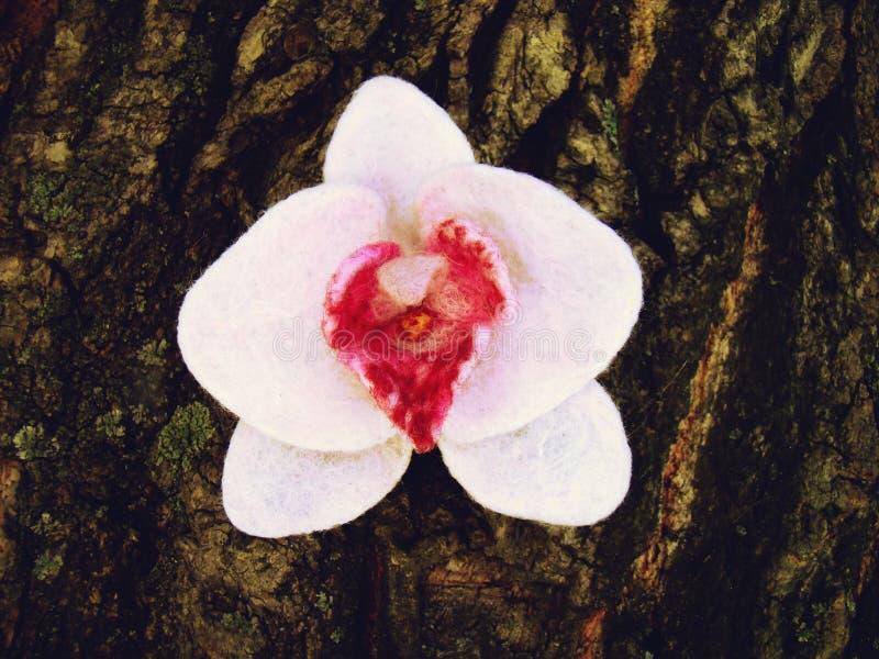 Orquídea delicada blanca en el tronco de un árbol imagen de archivo
