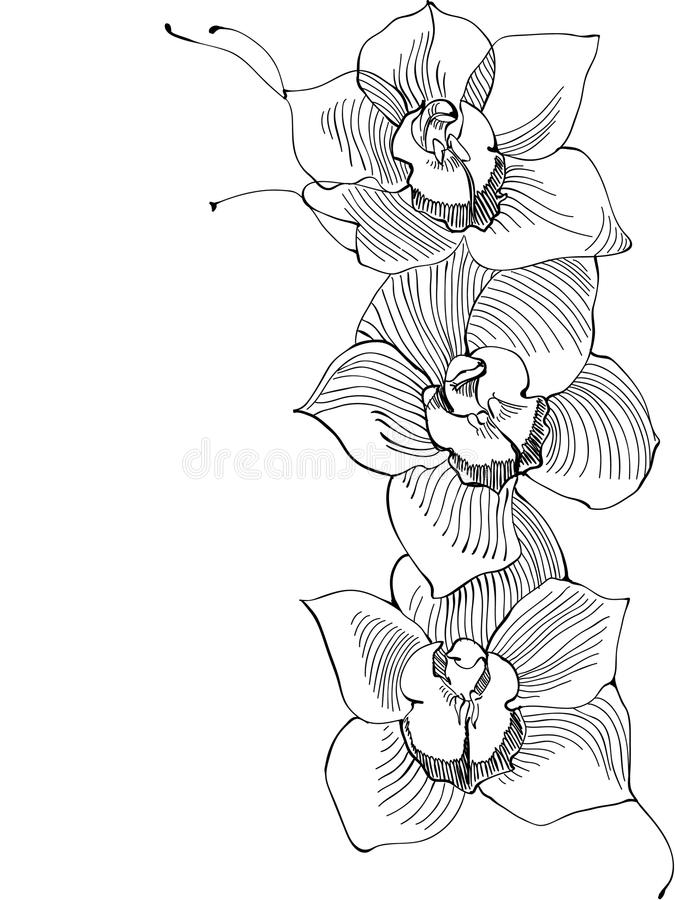 Orquídea do desenho ilustração royalty free