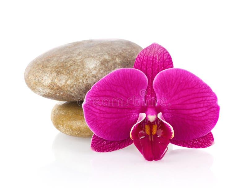 Orquídea do Phalaenopsis da flor com pedra do mar imagem de stock royalty free