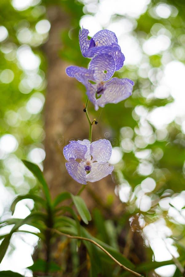 Orquídea do roxo da beleza fotografia de stock