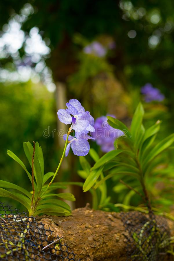 Orquídea do roxo da beleza fotos de stock royalty free