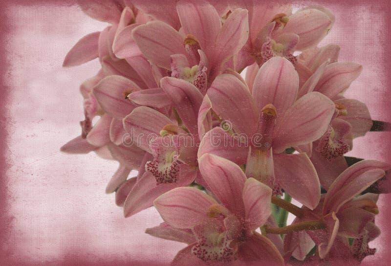 Orquídea do vintage foto de stock