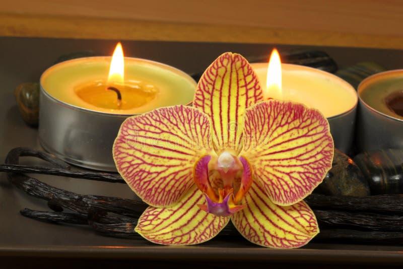 Orquídea e baunilha nos termas imagens de stock