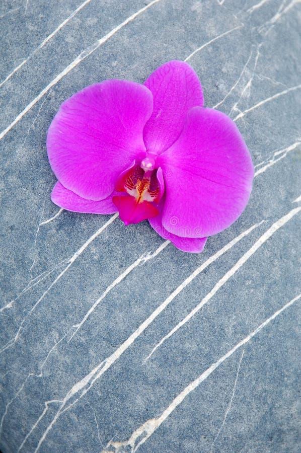 Orquídea e pedra fotografia de stock