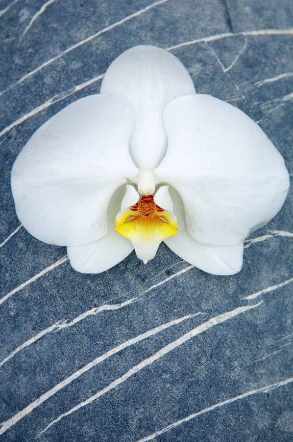 Orquídea e pedra fotos de stock
