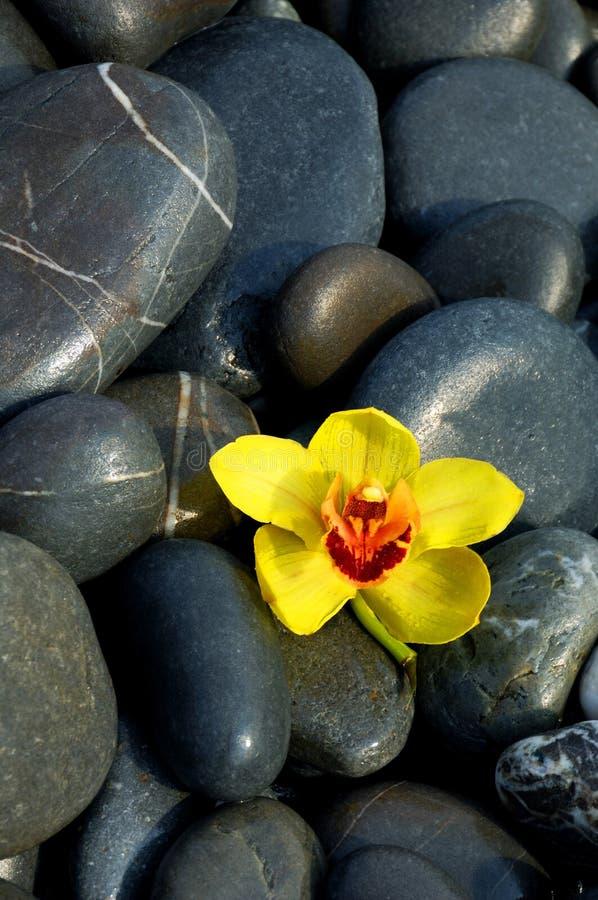 Orquídea e pedra imagens de stock royalty free