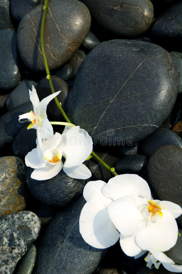 Orquídea e pedra foto de stock