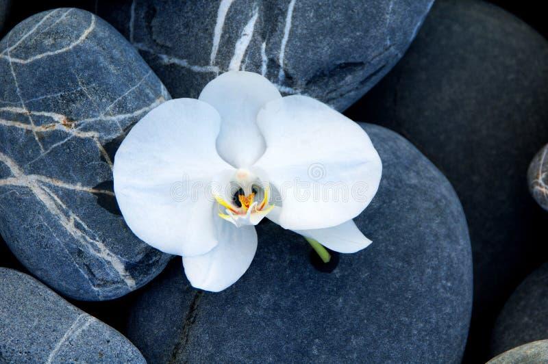Orquídea e pedra fotografia de stock royalty free