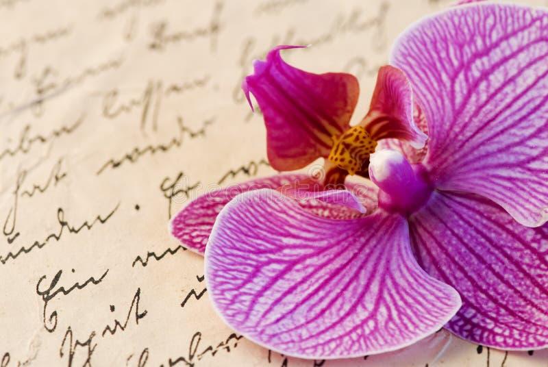 Orquídea en carta imagenes de archivo