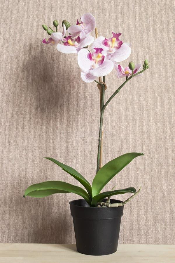 Orquídea en conserva rosada imagenes de archivo