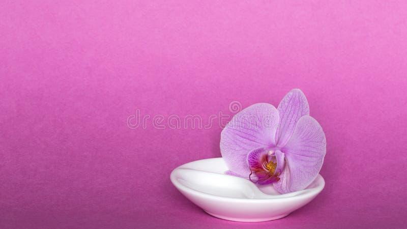 Orquídea en fondo rosado fotografía de archivo libre de regalías