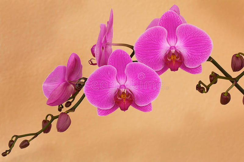 Orquídea en la floración foto de archivo