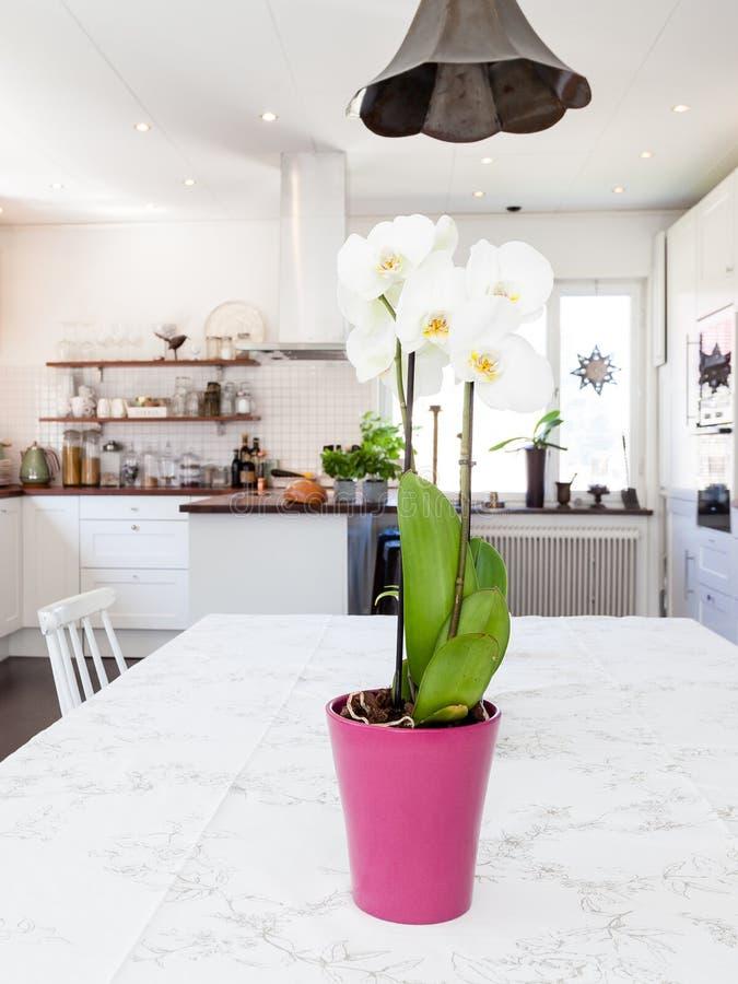 orquídea en la tabla en la cocina del primero plano borrosa en el fondo fotos de archivo libres de regalías
