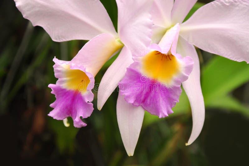 Orquídea floral do detalhe fotografia de stock royalty free