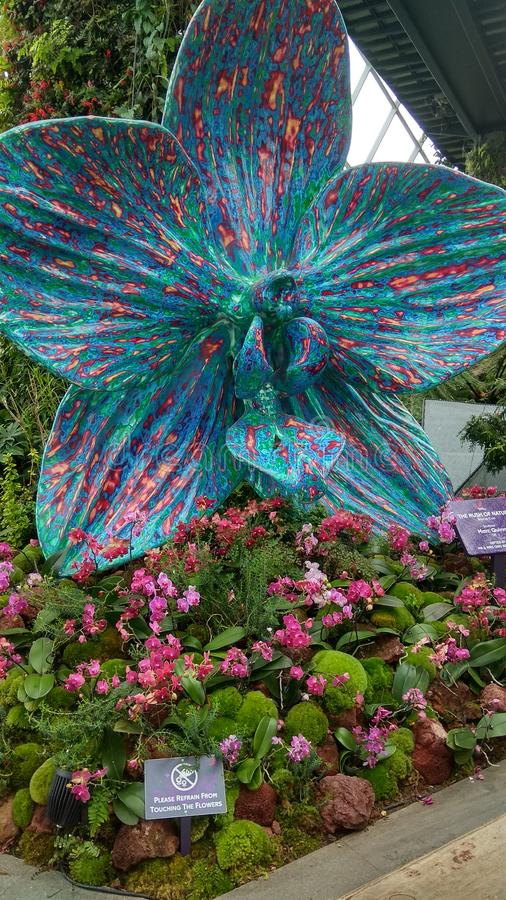 Orquídea grande de Singapura Orchidea Garden imagem de stock royalty free