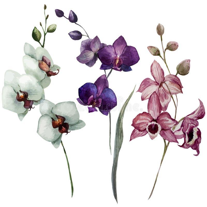 Orquídea hermosa flower3 stock de ilustración