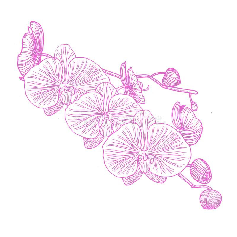 Orquídea Mano drenada gráficos libre illustration