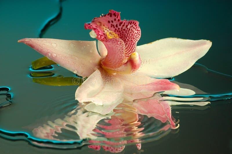 Orquídea molhada #2 imagens de stock royalty free
