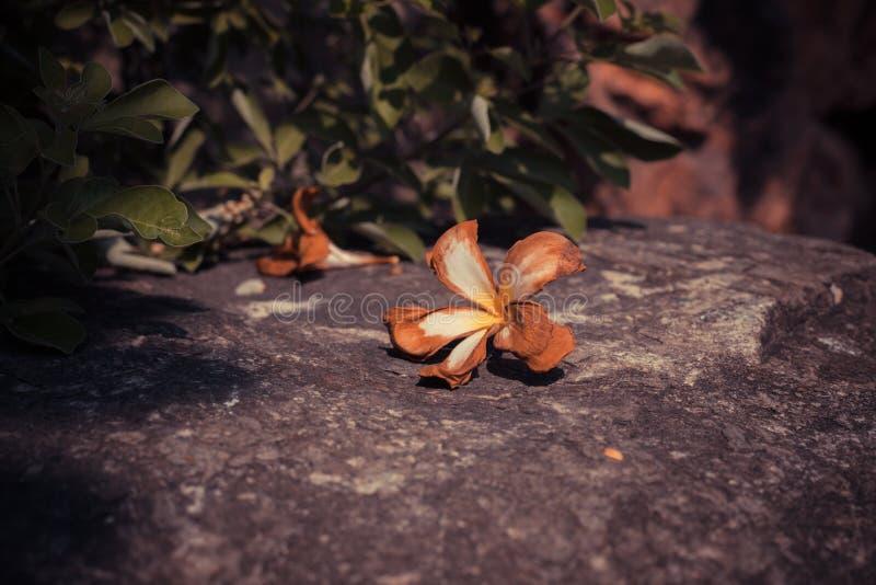 Orquídea muerta en una roca fotografía de archivo