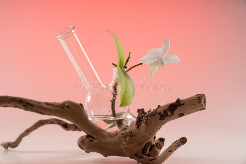 A orquídea na embarcação de acessórios de fumo Bong 2 imagens de stock royalty free