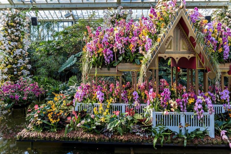 A orquídea na estufa de Kew jardina em Londres foto de stock royalty free