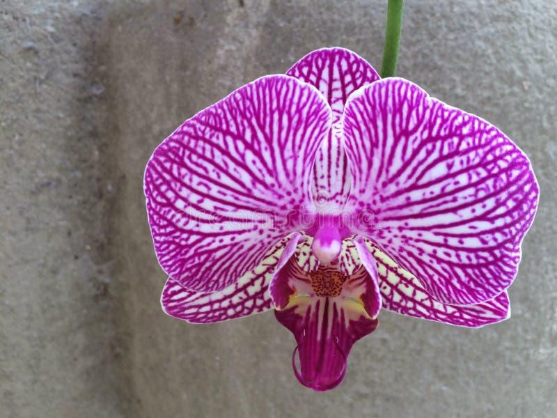 Orquídea na pedra fotografia de stock