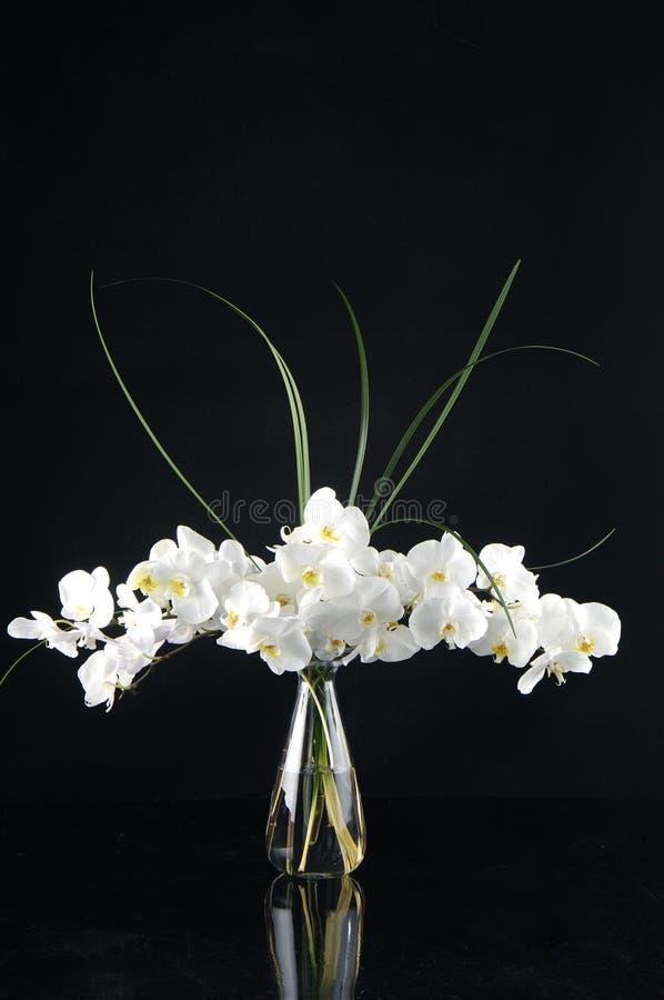 Orquídea no vaso fotografia de stock