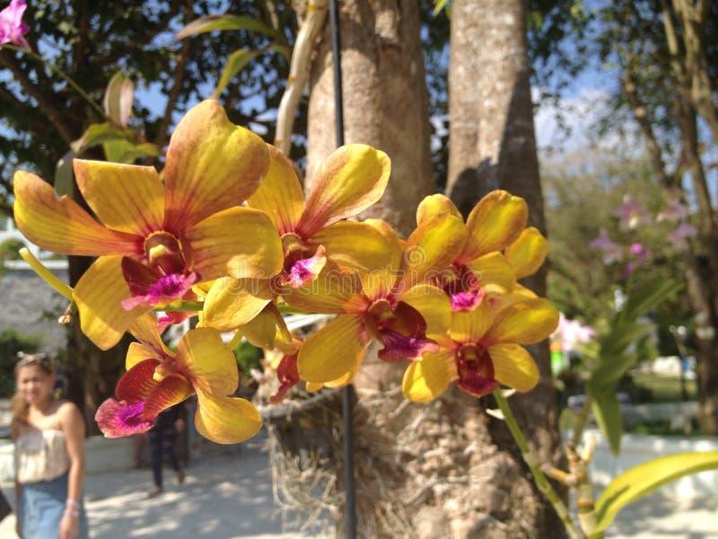 Orquídea o flor en Tailandia fotos de archivo