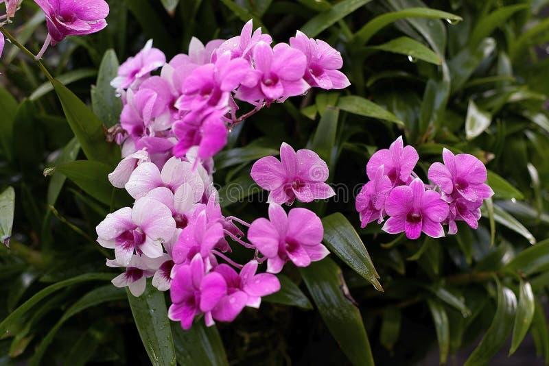 Orquídea, orquídeas, fundo, pinkblossom fotografia de stock