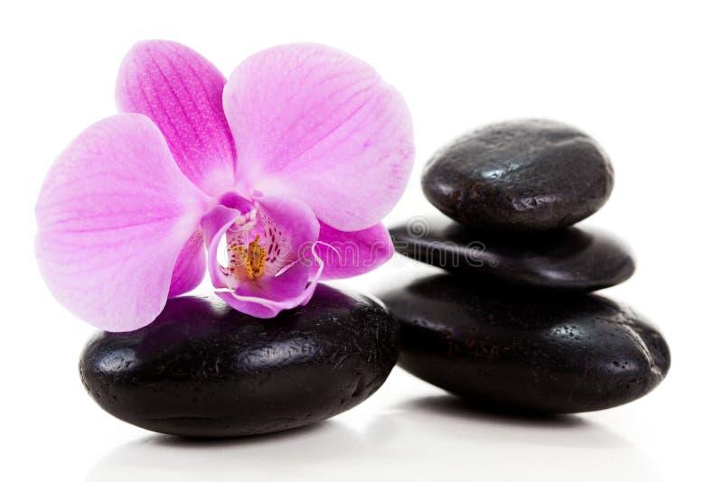 Orquídea púrpura fotos de archivo