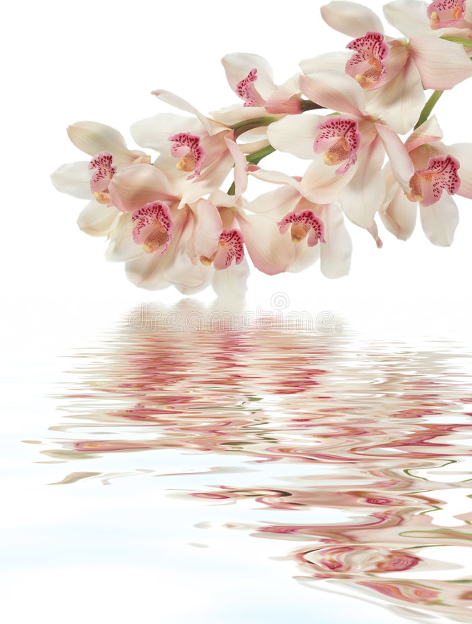 Download Orquídea púrpura imagen de archivo. Imagen de oriental - 7283149