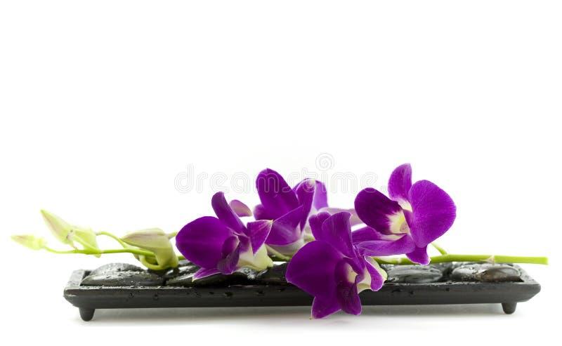 Orquídea púrpura hermosa imagenes de archivo