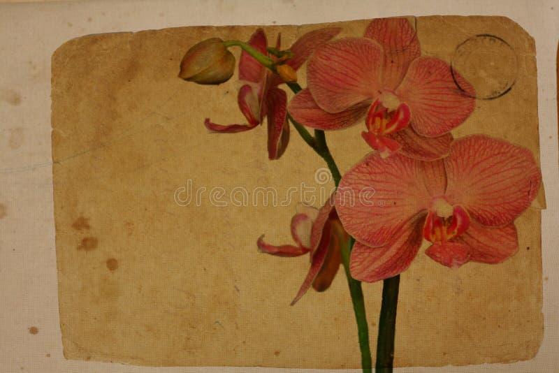 Orquídea púrpura. Tarjeta retra fotos de archivo
