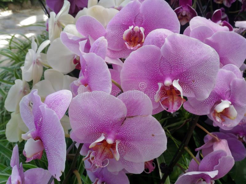 Orquídea, planta, flor, bonito, exótico, tropical, botão, verde, cor-de-rosa, branco, grama, fauna, natureza, ramo, golpe, flores fotos de stock