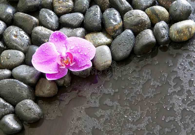Orquídea, rochas e gotas de água roxas bonitas. imagem de stock royalty free