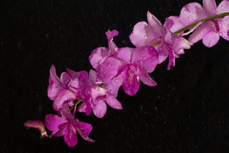 orquídea rosada en gota de lluvia foto de archivo libre de regalías