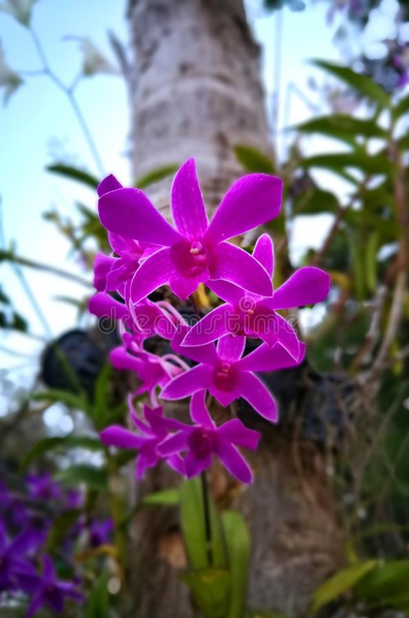 Orquídea rosada que florece en un jardín foto de archivo