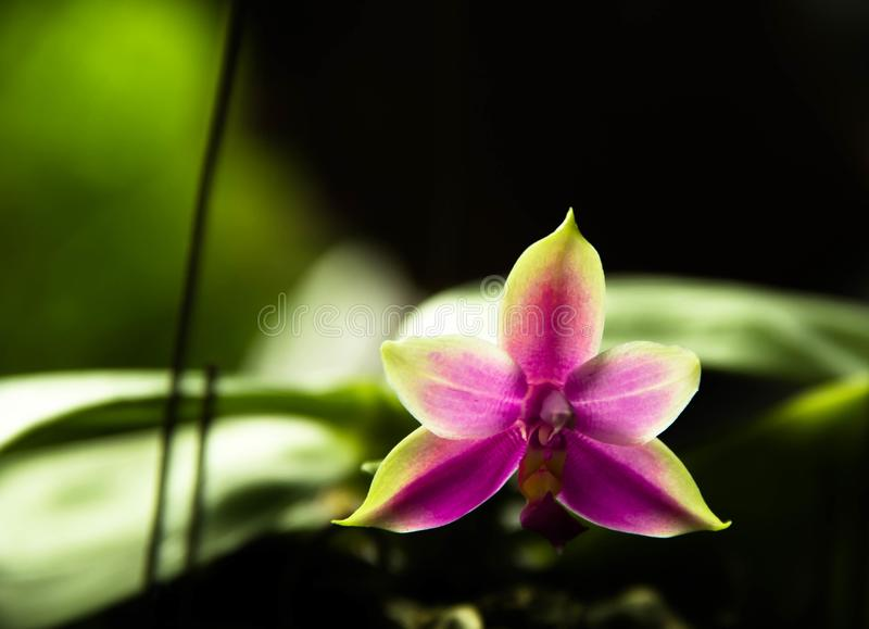 Orquídea roxa bonita imagem de stock royalty free