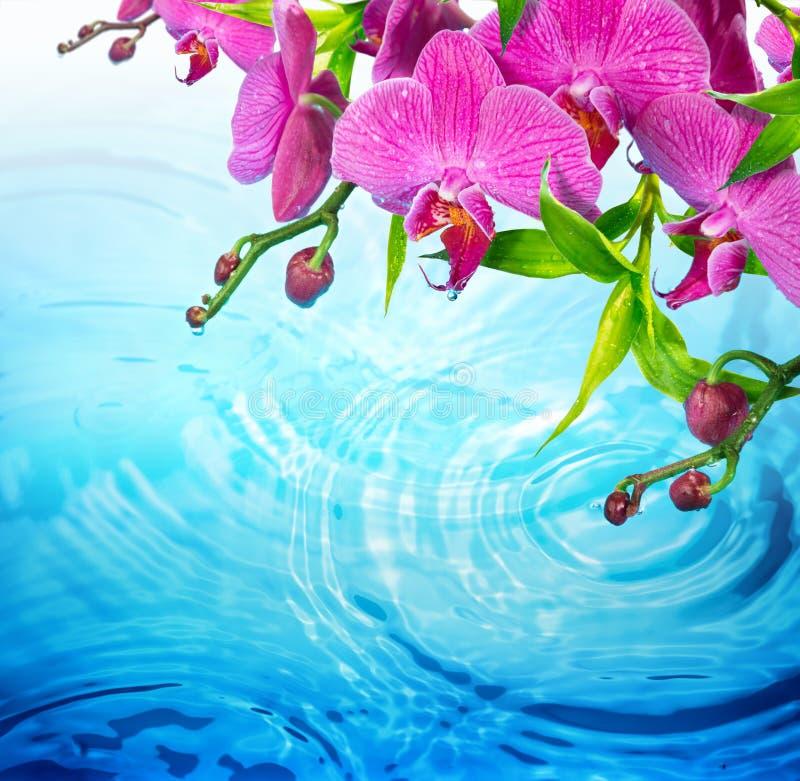 Orquídea roxa na água azul rippled foto de stock royalty free