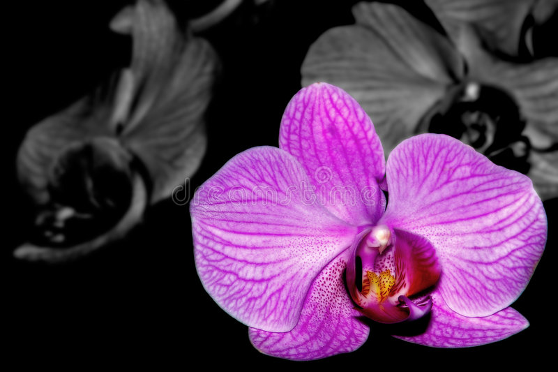 Orquídea seletiva imagem de stock royalty free