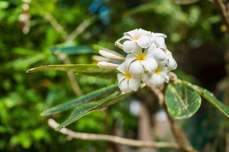 A orquídea tropical da flor das flores floresce o ramalhete fotos de stock royalty free