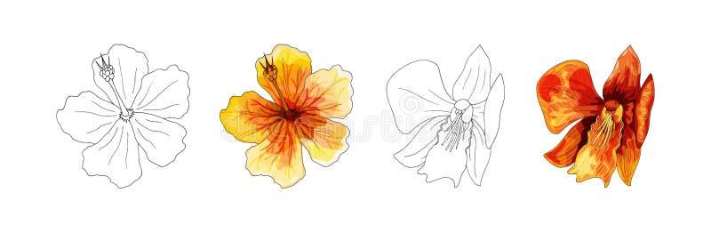 Orquídea tropical, flor roja con las venas anaranjadas y amarillas en el fondo blanco imagen de archivo libre de regalías