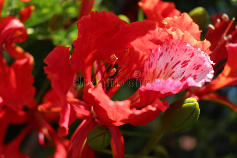 Orquídea vermelha e cor-de-rosa fotografia de stock royalty free