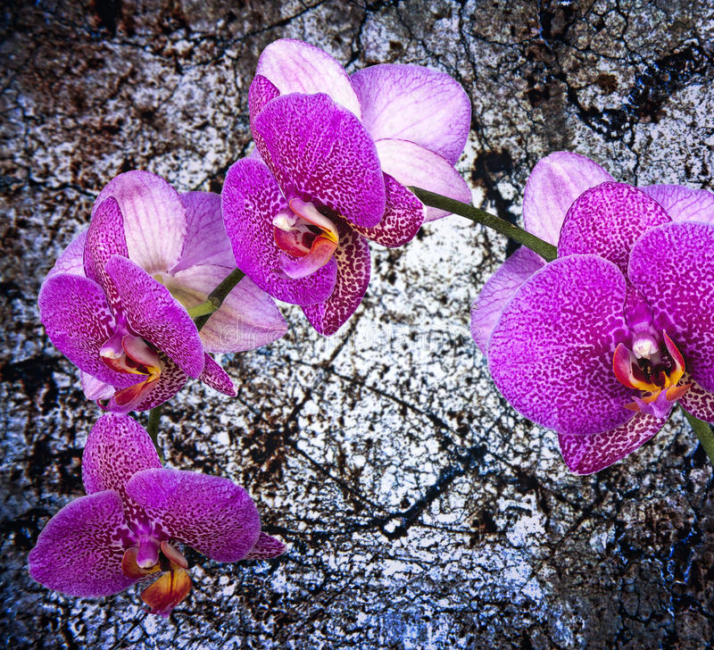 Orquídea violeta foto de stock royalty free