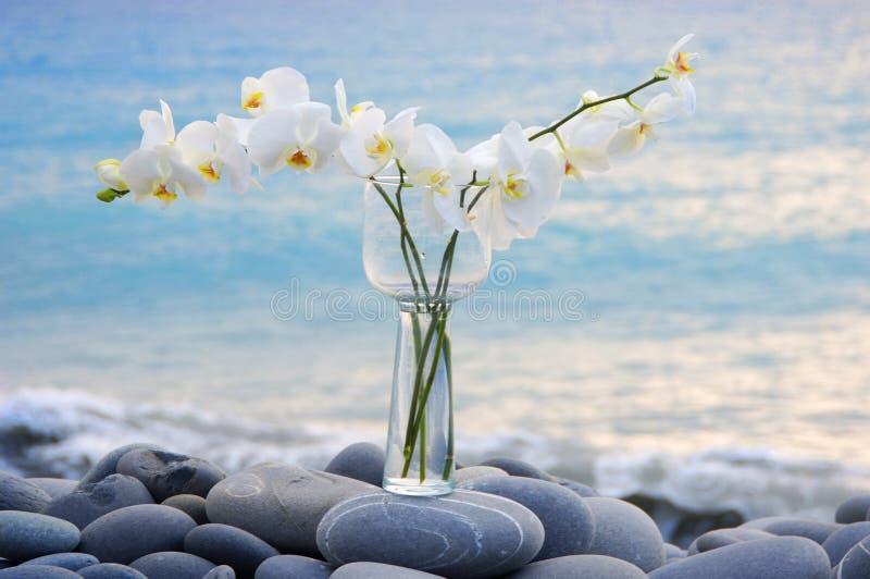 Orquídea y piedra foto de archivo