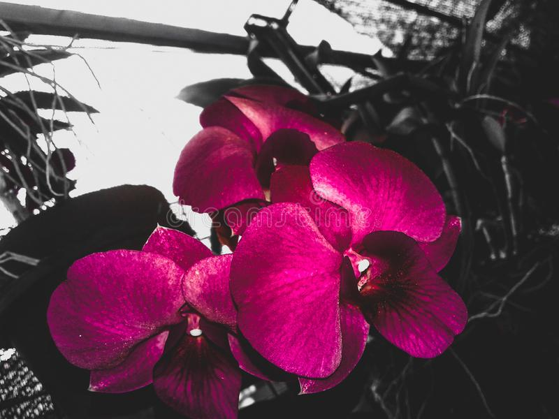 orquídeas fotografía de archivo libre de regalías
