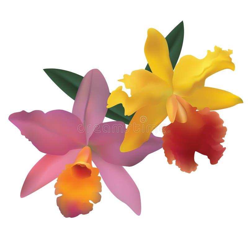 Orquídeas. ilustração royalty free